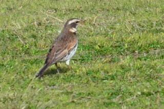 草で覆われた野原の上に立っている鳥の写真・画像素材[3012350]