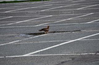 駐車場に立っている人の写真・画像素材[3012355]