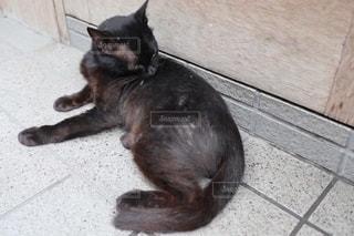 黒猫の写真・画像素材[2737799]