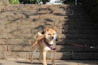 犬 - No.106089