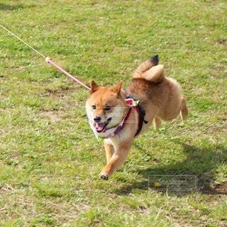 犬 - No.106153