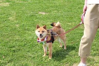 No.106175 犬