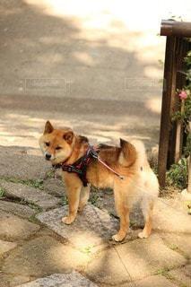 犬 - No.106943