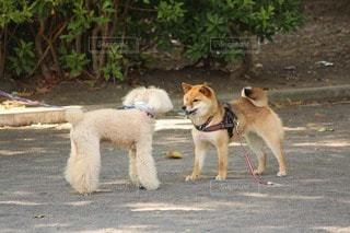 犬 - No.107001