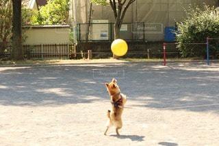 犬 - No.106991