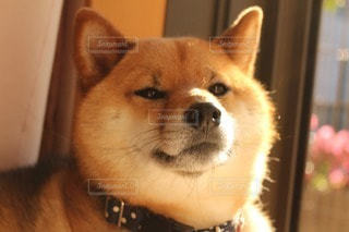 犬 - No.107014