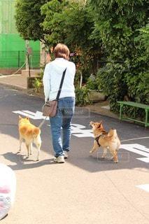 No.107061 犬