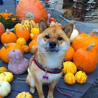 No.107604 犬