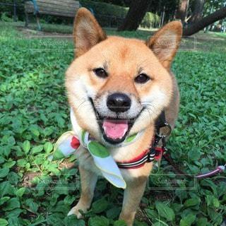 犬 - No.107627
