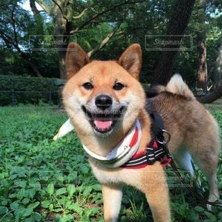 No.107638 犬