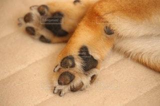 犬 - No.116973