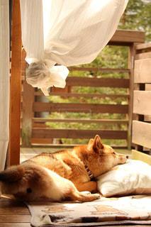 窓辺で眠る柴犬 - No.849541