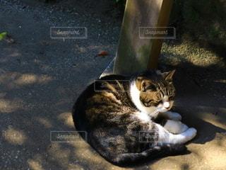 木陰で微睡む猫の写真・画像素材[2742576]