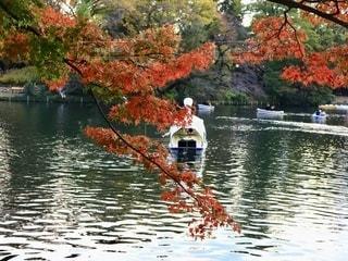 後ろ姿のスワンボートと紅葉の写真・画像素材[2753487]