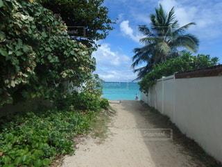 海につながる小道の写真・画像素材[2756818]