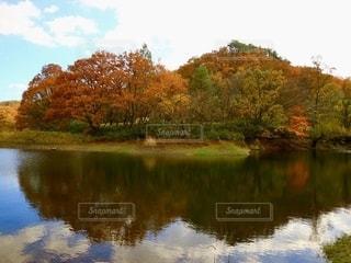 木に囲まれた水域の写真・画像素材[2768217]