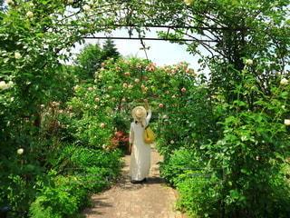 花畑を散歩の写真・画像素材[2771518]