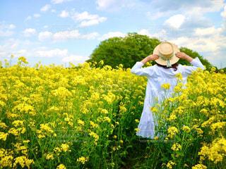 菜の花畑と白ワンピースの写真・画像素材[2806329]