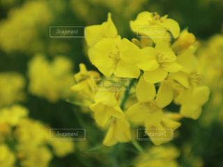 花をクローズアップするの写真・画像素材[2806326]