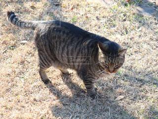 草の中に立っている猫の写真・画像素材[2859643]