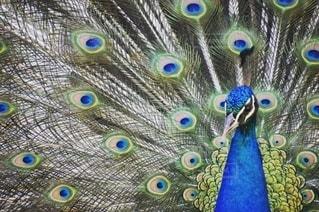 テーブルの上に立っているカラフルな鳥の写真・画像素材[2739809]