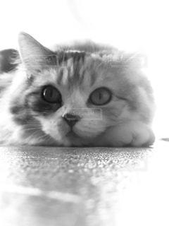 モノクロな愛猫の写真・画像素材[2740564]
