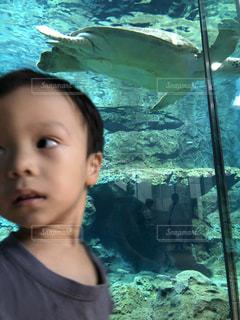 水族館での一コマの写真・画像素材[2740125]