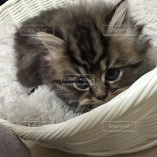 ベッドに横たわっている猫の写真・画像素材[2871693]