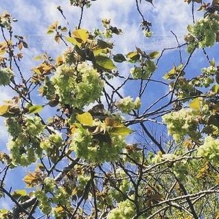 木の枝に止まっている鳥の写真・画像素材[2740983]