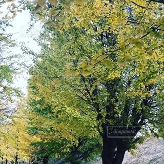 秋の写真・画像素材[2749135]