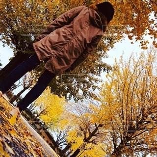 秋の写真・画像素材[2749137]
