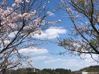 自然の写真・画像素材[2749806]