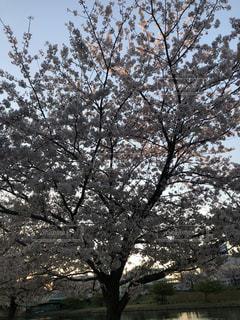 花の写真・画像素材[2754971]