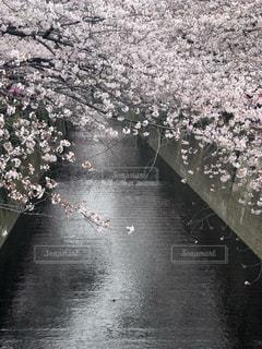 花の写真・画像素材[2754977]