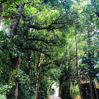 森の中の木の写真・画像素材[3164726]