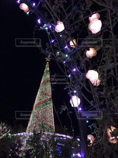 ライトアップされたクリスマスツリーと花の写真・画像素材[2746105]