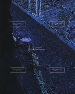 七月、失踪の写真・画像素材[2741675]