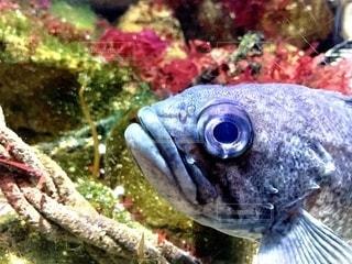 魚の写真・画像素材[2755825]