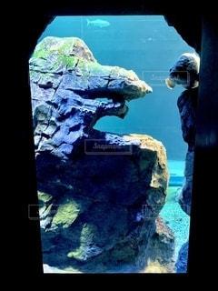 ゴジラ岩の写真・画像素材[2755845]