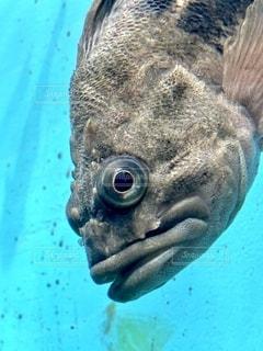魚の写真・画像素材[2759303]