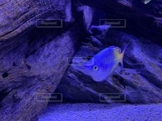 魚をクローズアップするの写真・画像素材[2764407]