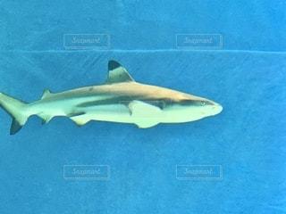 水中のサメの写真・画像素材[2764614]