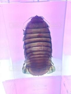透明標本の写真・画像素材[2769268]