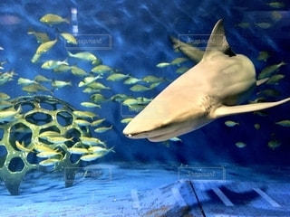 サメの写真・画像素材[2769812]