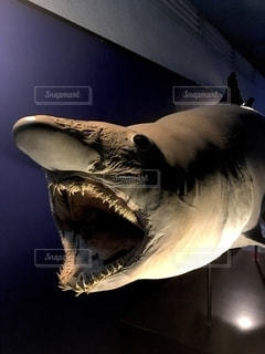 サメの写真・画像素材[2769845]