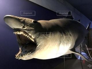 サメの写真・画像素材[2769847]