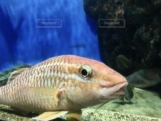 魚をクローズアップするの写真・画像素材[2782750]
