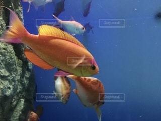 魚の写真・画像素材[2782755]