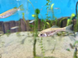 魚の写真・画像素材[4683904]