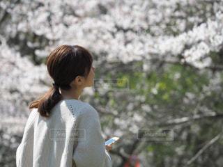 来年も桜は咲くの写真・画像素材[3082607]